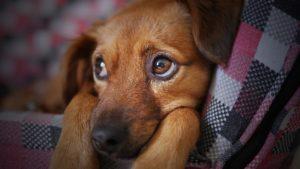 【お悩み相談】妊娠してから急に愛犬のわがままが増えました。