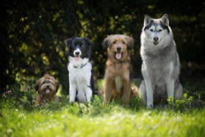 犬が吠えてうるさい2つの理由と対策とは?