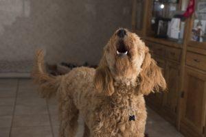 犬が言うことを聞かないのは何故?3つのポイントにまとめてみました!