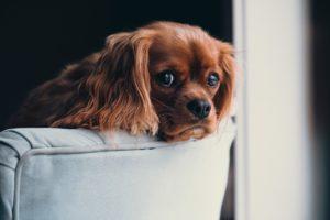 犬が肥満になると起こり得る2つのリスクをお伝えします。