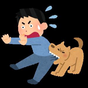 主従関係はもう古い?犬と人間は主従関係ではなく家族関係が正しい理由とは?