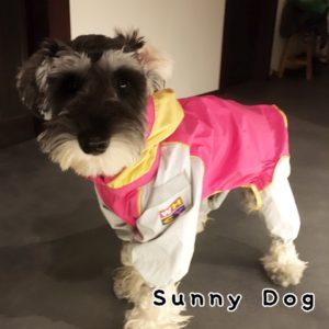 ミニチュアシュナウザーの子犬、らら君 今までのトレーニングの復習を行いました!